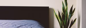 Bed with a plant on the bedside table