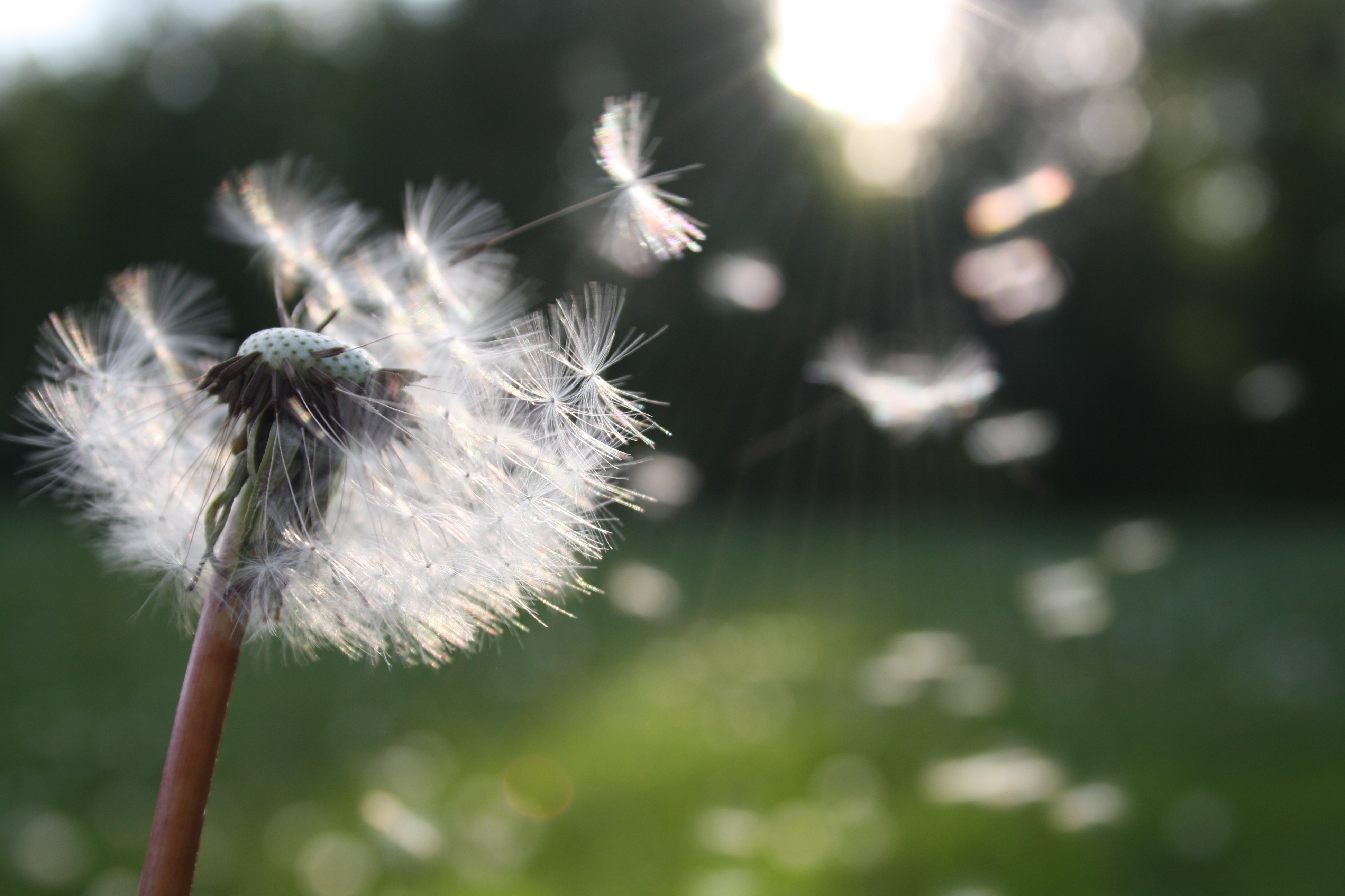 Pollen can cause spring allergies